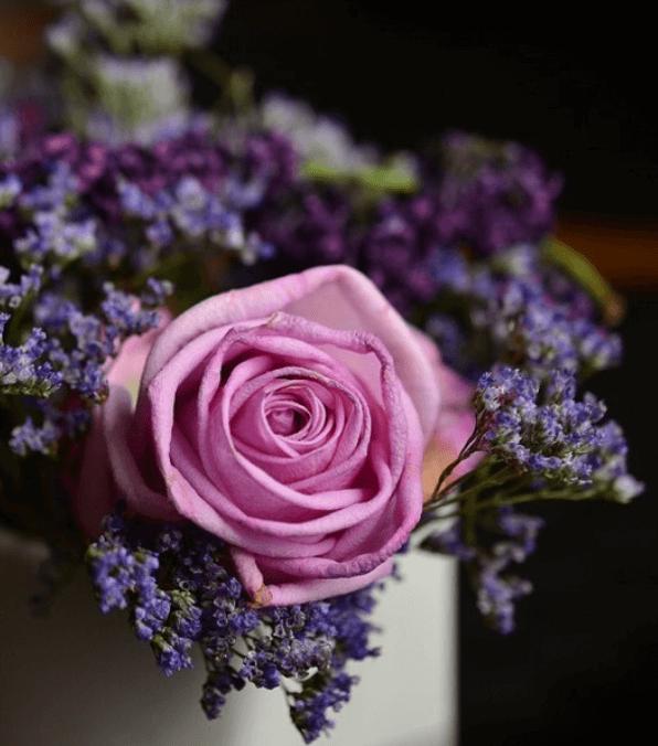 fleurs rose